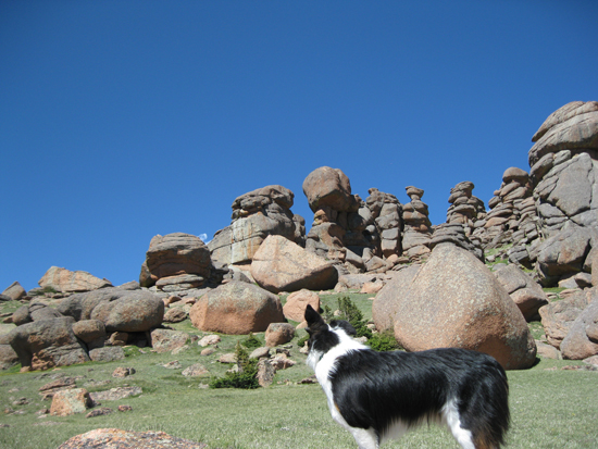 Fremont the border collie at Bison Peak, Colorado