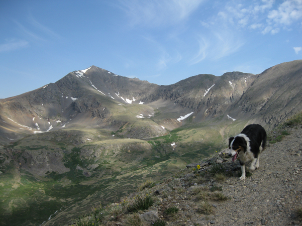 Fremont the border collie in front of Grays Peak Colorado.