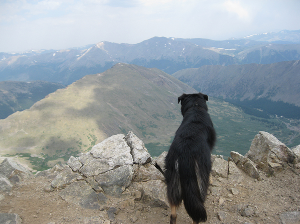 Mystic border collie on Mount Edwards Summit