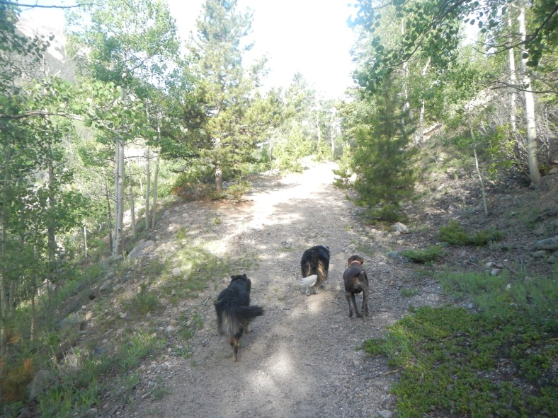 dogs-730-mine-trail