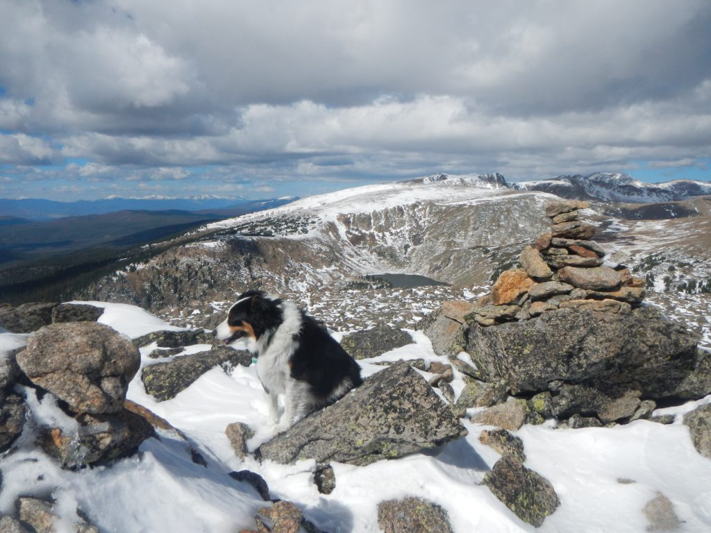 The summit of Mount Epworth. Fremont the border collie